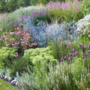 Декоративная трава — 140 фото оригинального дизайна. Обзор лучших сортов травы для сада, инструкция, отзывы, видео + рекомендации садовника