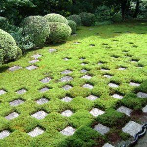 Декоративный мох для сада — 129 фото эксклюзивного дизайна. Только оригинальные и практичные решения + пошаговая инструкция