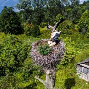 Гнездо аиста — настоящий символ семейного счастья у вас на крыше (фото + видео)