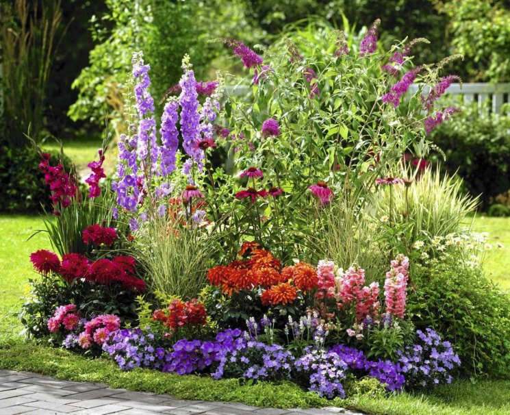 Цветники из многолетников лучшие схемы