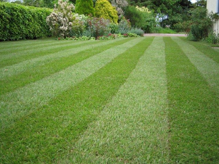 Красивый газон на участке - инструкция как оформить и ухаживать за современным газоном. Много фото эксклюзивного оформления и дизайна газона