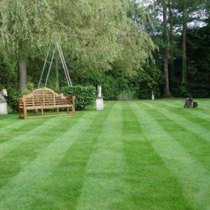 Красивый газон на участке — инструкция как оформить и ухаживать за современным газоном. Много фото эксклюзивного оформления и дизайна газона