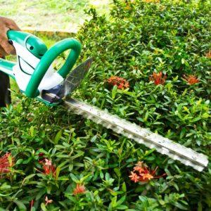 Кусторез — подстригаем живую изгородь как профессионал (фото + видео)
