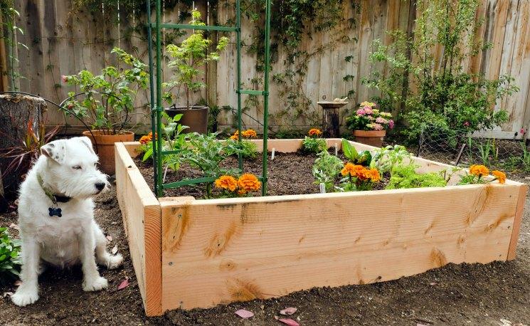 Огород на дачном участке: практичные, красивые и элегантные решения для любителя грядок