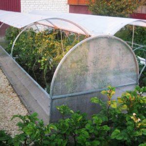 Парник своими руками: виды, конструкции и инструкции по самостоятельному изготовлению для садоводов