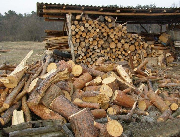 выигрышно картинка с дровами нашли кота впервые