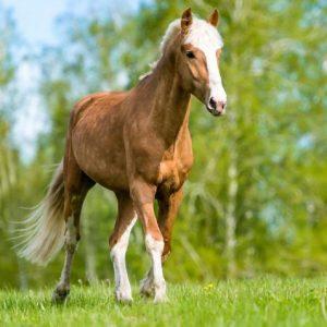 Породы лошадей — многообразие и характеристики пород а также правила содержания и ухода
