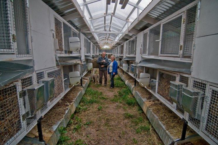 интересные выращивание кроликов бизнес фото ценность