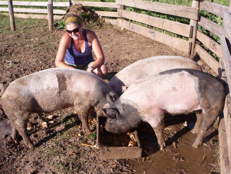 Режем свинью - правила и виды забоя свиньи а также правила разработки тушки (фото   видео)
