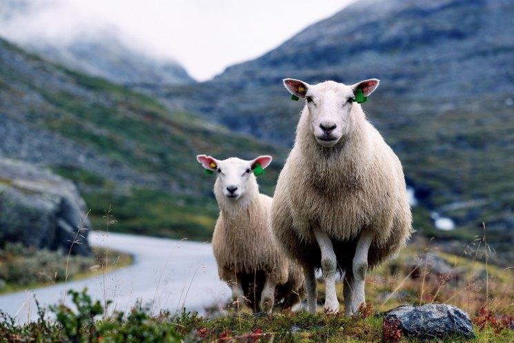 Изделия из шерсти овцы