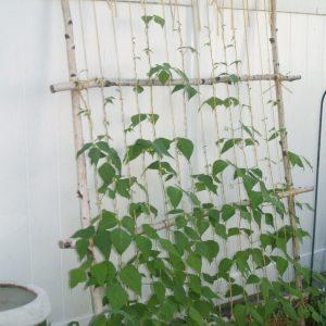 Шпалера (130 фото) — инструкция по созданию эффективной опоры для растений своими руками. Схема, рекомендации, обзор готовых конструкций