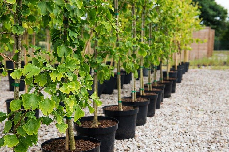 Плодовые деревья - правила посадки деревьев разных видов выбор саженцев видео