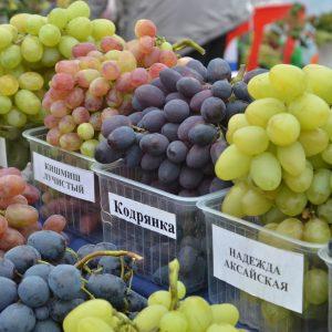 Саженцы винограда — как выбрать, где купить, цена. Самые лучшие виды саженцев, а также инструкция, как выбрать здоровый саженец и не ошибиться