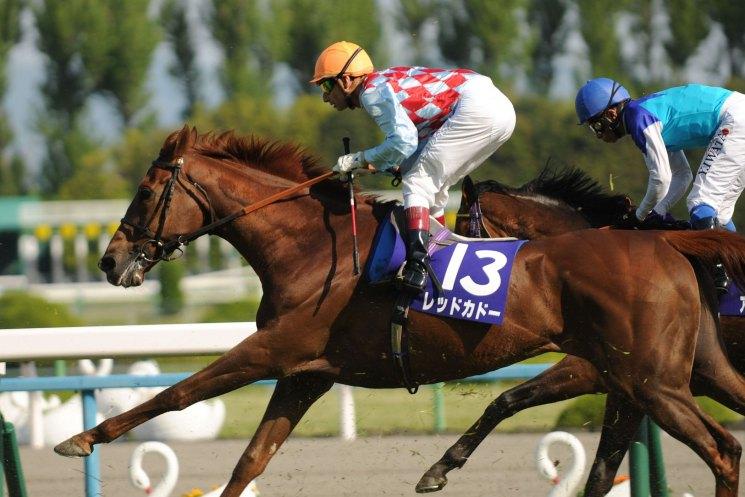 Скачки на лошадях — разнообразие видов увлекательных состязаний для любителей конной езды и зрителей