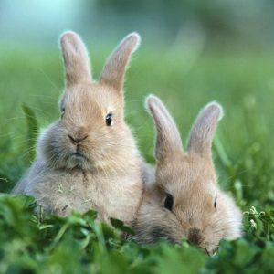 Содержание кроликов — домашний любимец, содержание и разведение декоративных пород