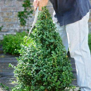 Стрижка кустов — основы правильного выбора растений и формирования правильных форм, подбор инструмента (фото + видео)