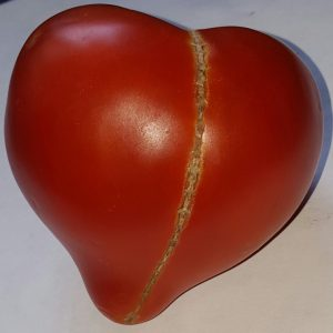 Томат бычье сердце — особенности и основные характеристики популярного сорта томатов (фото + видео)