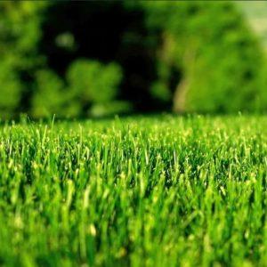 Уход за газоном своими руками: полив, стрижка, удобрение, мульчирование — советы опытного садовника + фото и видео