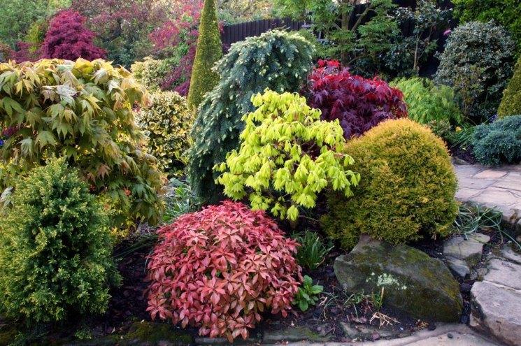 Декоративные древовидные растения