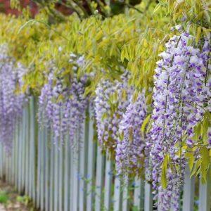 Вьющиеся растения (120 фото) — обзор лучших декоративных растений для сада. Названия и описания самых популярных видов растений