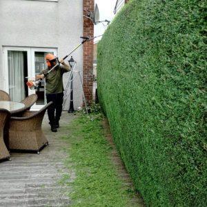 Живой забор — лучшие идеи из чего сделать живую изгородь на дачном участке. Много фото готовых вариантов с эксклюзивным дизайном + инструкция