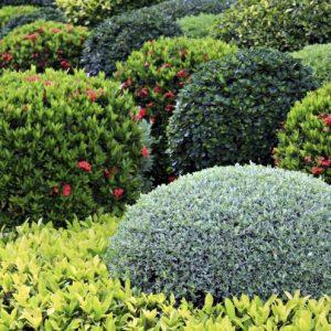 Декоративные растения — 140 фото вариантов. Обзор самых популярных растений с названиями и описанием. Рекомендации садовника + отзывы