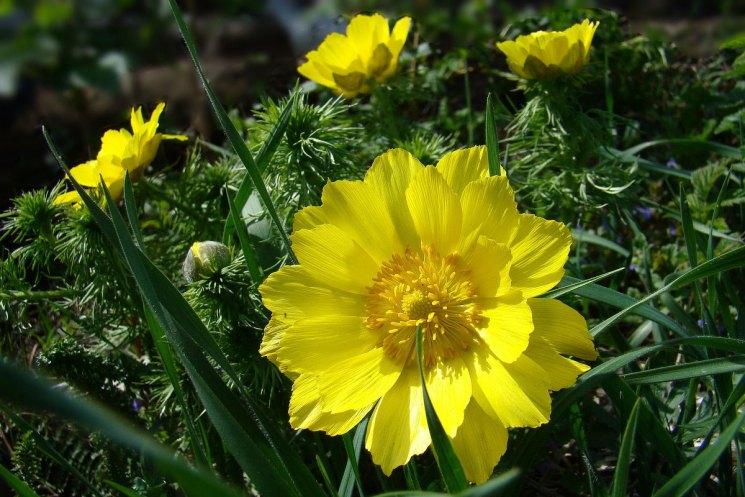 Цветы для клумбы цветущие всё лето: фото и название