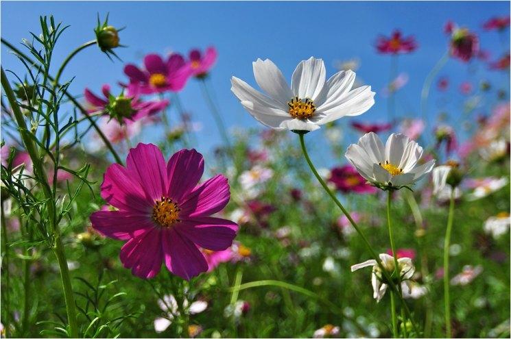 Растения цветника фото и названия