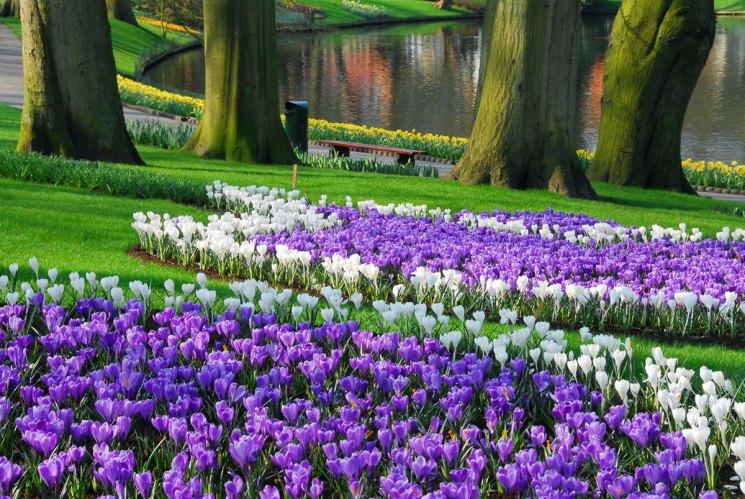Лучшие цветы для дачи: 115 фото идей использования красивых и оригинальных цветов