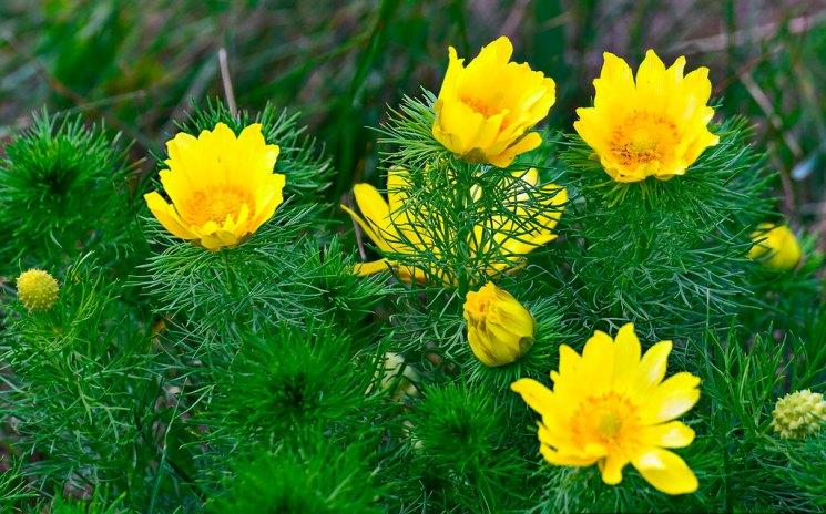 Неприхотливые цветы для сада - лучшие растения для ленивого сада и советы по выбору цветов (95 фото)