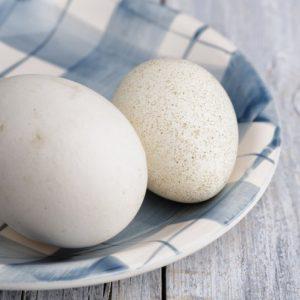 Утиные яйца — тонкости и секреты инкубации. Пошаговая инструкция как выращивать утят при помощи инкубатора (130 фото и видео)